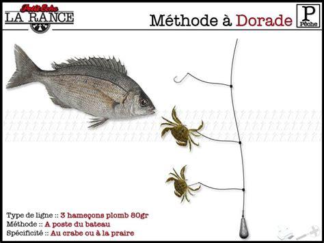 comment cuisiner une dorade méthode pour la pêche de la dorade guide de peche en