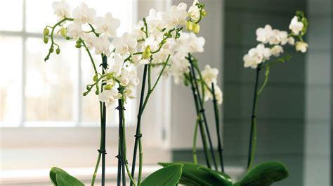 plante verte salle de bain quelles plantes choisir pour une salle de bains