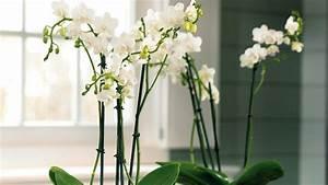 quelles plantes choisir pour le bureau With deco pour jardin exterieur 6 deco bureau entreprise