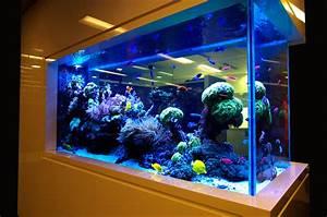 Aquarium Design App : Scenic Aquarium Design Aquarium