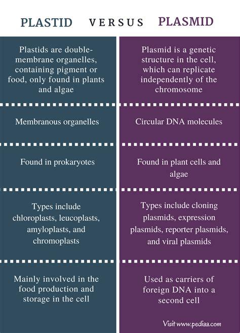 difference  plastid  plasmid definition types
