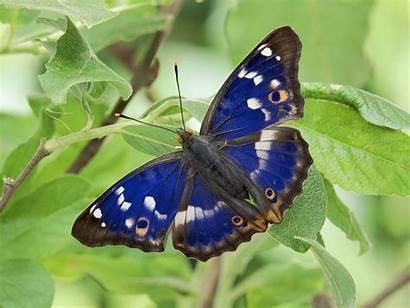 Butterfly Wallpapers Butterflies Purple Pretty Mobile Emperor