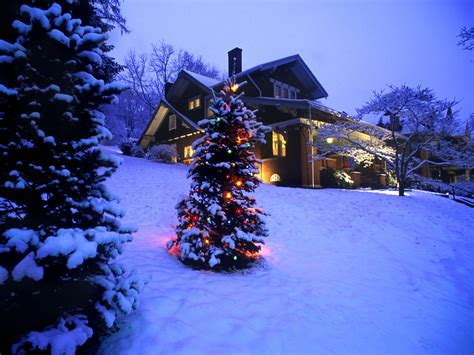 christmas trees in snow www imgkid com the image kid