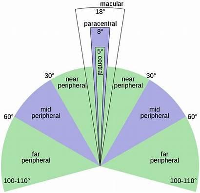Peripheral Vision Svg Wiki Wikipedia