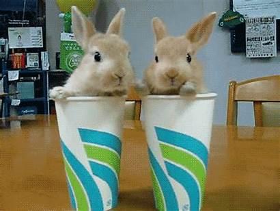 Rabbit Gifs Animal Adorable Tube Cups Animals
