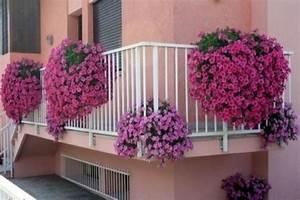 Piante da balcone resistenti Piante da terrazzo Scegliere le piante da balcone