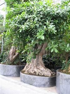 Zimmerpflanze Große Blätter : hydrokultur alexander wissig der faktor licht ~ Lizthompson.info Haus und Dekorationen
