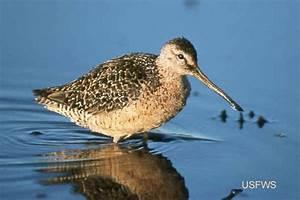 Image Gallery estuary birds