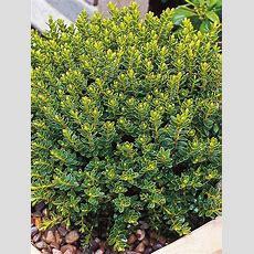 14 Perennials For Full Sun  Outdoorsyard & Garden
