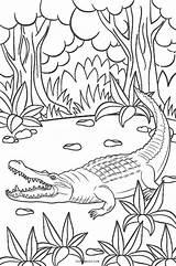 Coloring Alligator Pages Baby Printable Print Cute Cool2bkids Crocodile Preschool Getcolorings Getdrawings sketch template