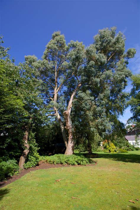 home grange oxton grange care home birkenhead cheshire springcare ltd