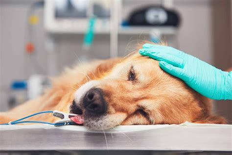 lung cancer adenocarcinoma  dogs symptoms