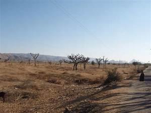 Desert Scrub   Photo