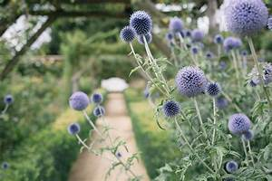 Sensory, Garden, Plants