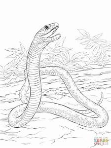 Black Mamba Coloring Page Free Printable Coloring Pages