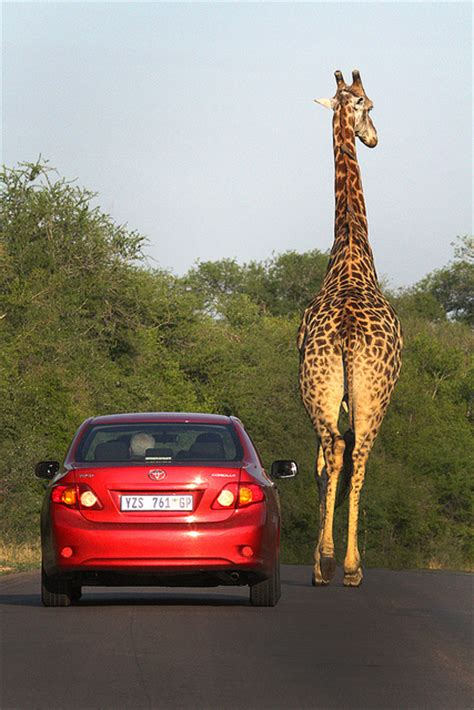 Car Rental Elizabeth South Africa by Afristay Travel Discover More Find Your