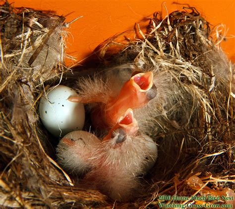 what do baby birds eat baby bird eating