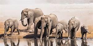Elefante Wild For Life