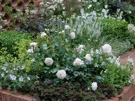 plant a and perennial garden hgtv
