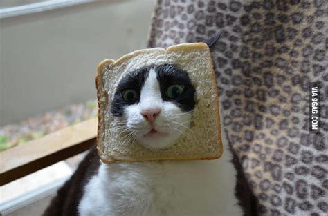 Bread Cat Is New Meme 9gag