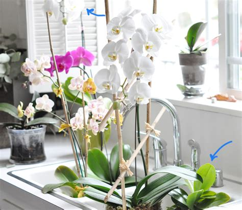 do orchids regrow flowers how i re grew my orchids love maegan