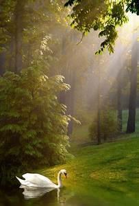 Schöne 3d Bilder : pin von maud peters auf animals pinterest sch ne naturbilder naturbilder und natur ~ Eleganceandgraceweddings.com Haus und Dekorationen