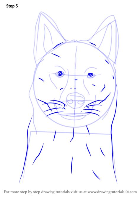 learn   draw  siberian husky dog head dogs step