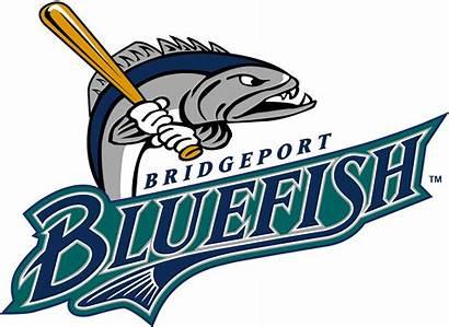 Baseball Bluefish Bridgeport Team Logos League Connecticut