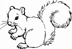 Squirrel coloring page | Free Printable Coloring Pages