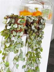 Grünpflanzen Im Schlafzimmer : gr npflanzen im zimmer so werden sie in szene gesetzt plantes d 39 int rieur pinterest ~ Watch28wear.com Haus und Dekorationen