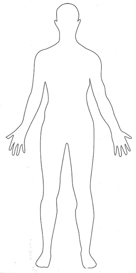 body outline templates  jpg  premium