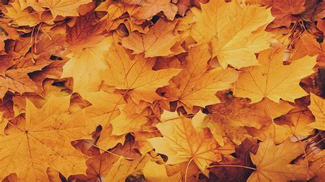 Aesthetic Autumn Wallpapers Desktop by Aesthetic Autumn Foliage Hd Wallpaper Www Opendesktop Org