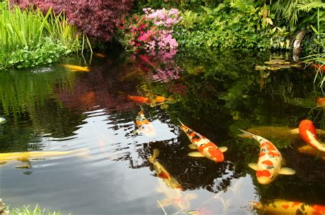 different types of japanese gardens types of plants for japanese garden landscapers talklocal blog