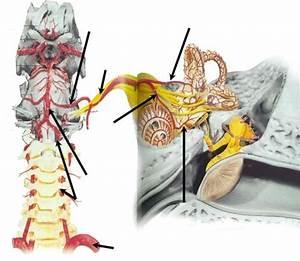 Как снять боль при артроз коленного сустава