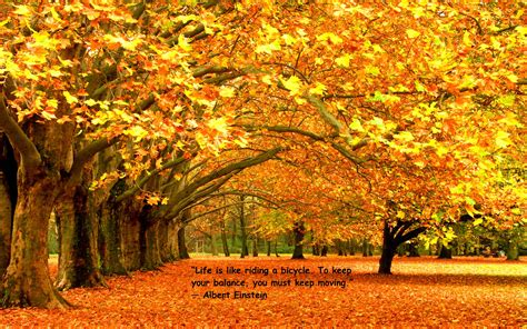 Fall Backgrounds And Quotes by Hd Wallpaper Quote Autumn Foliage 1920 215 1200 High