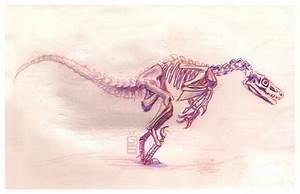 Velociraptor skeleton by griffsnuff on DeviantArt