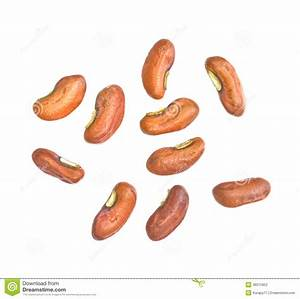 Seeds clipart long bean - Pencil and in color seeds ...