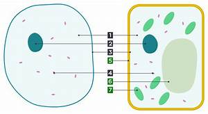 File Differences Between Simple Animal And Plant Cells