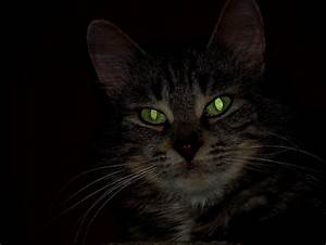 Why do cat's eyes glow in the dark? | Natural World of ...