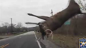 Police dashcam footage shows crazy deer crash | Accident ...