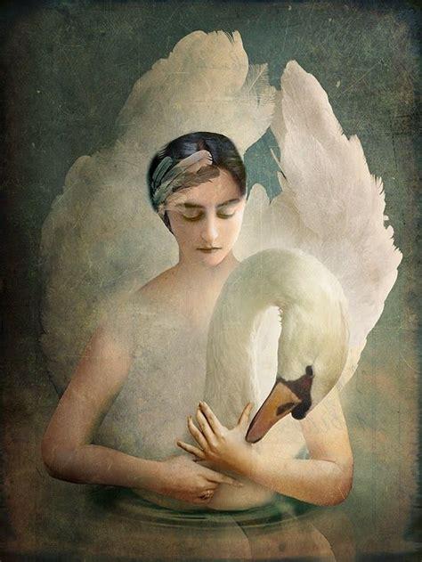 Swan Lake Swans Lakes Pinterest
