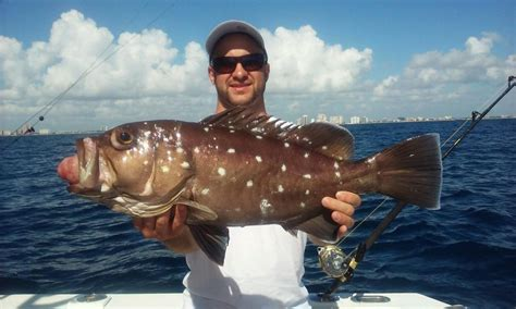 grouper deep snowy fishing dropping florida offshore lauderdale crazy sea caught ft nice shipwreck headquarters fishheadquarters happy