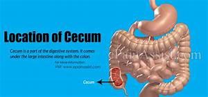 Large Intestine Pain Location