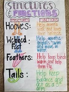 Animal Structures And Functions Anchor Chart Science