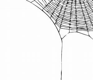 Best Spider Web Png #21479 - Clipartion.com