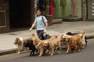 contrasting challenges facing professional dog walkers With the dog walking company