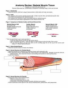Skeletal Muscle Review Worksheet For 9th