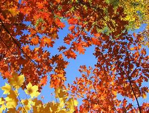 A Crisp Fall Day | Syzygy Event Productions
