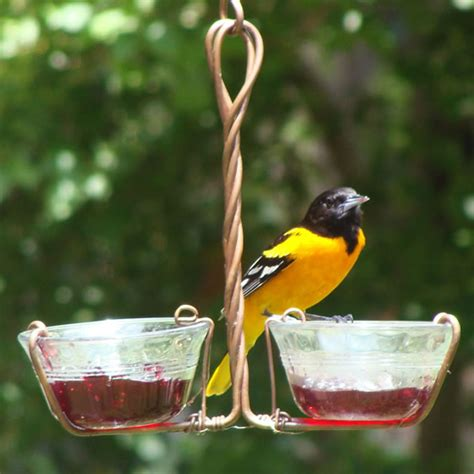 Oriole Feeder Grape Jelly by Duncraft Fruit And Jelly Feeder