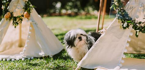 How Often To Shower Puppy by A Pet Friendly Puppy Shower